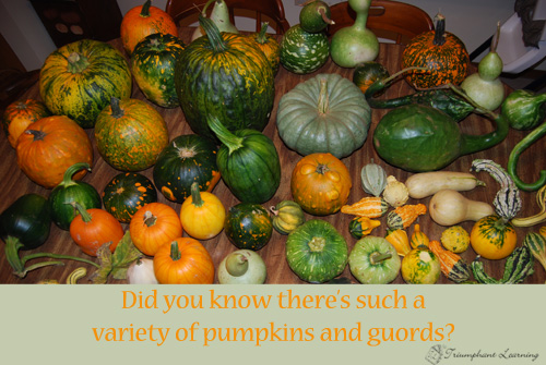 There's an amazing variety of pumpkins. Check out some new ones this year. | Triumphant Learning